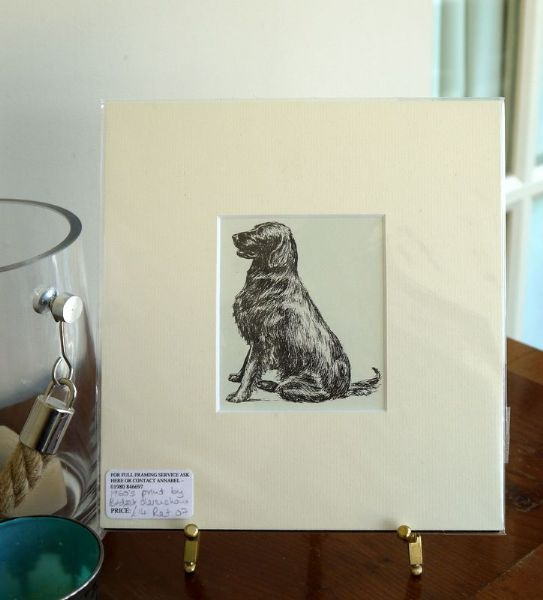Flat Coated Retriever - sitting - Ret O7 - 1960's print by Bridget Olerenshaw